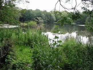 New Earswick nature reserve is celebrating its new charity status with an open day