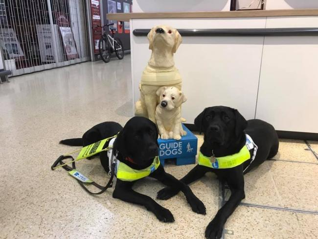 My Guide is a service provided by charity Guide Dogs who support people suffering from sight loss