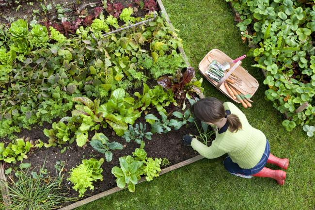 Gardening is an enjoyable pastime but it isn't always relaxing, says Helen Mead