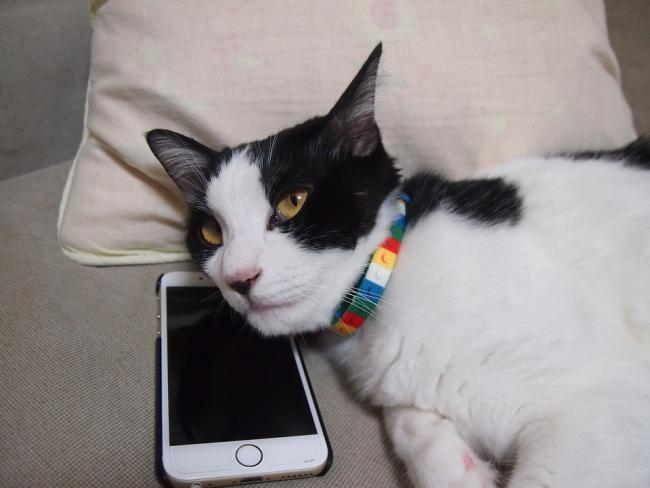 A Paws to Listen helpline has been set up by Cats Protection