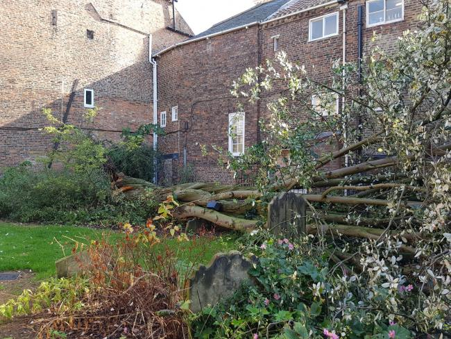 The collapsed tree next to Holy Trinity Church in York's Goodramgate. Picture: Holy Trinity Church / @YorkHolyTrinity
