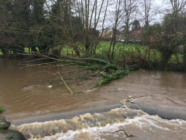 A tree which fell into the beck at Thornton-le-Dale during Storm Ciara     Picture: Cllr Janet Sanderson