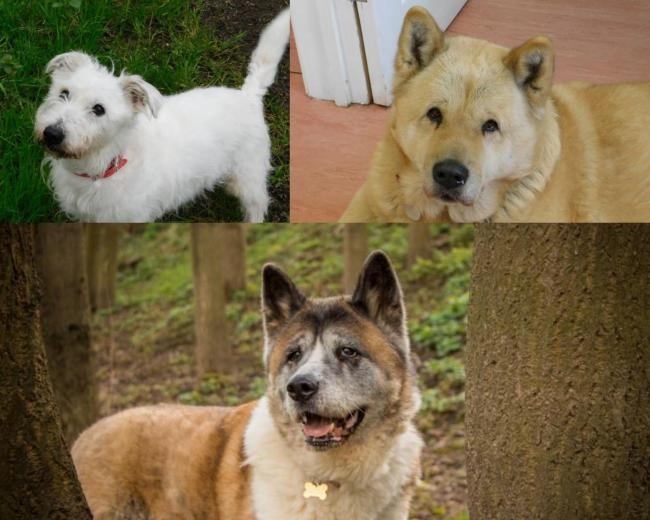 These dogs are looking for a new home (Photo: RSPCA)