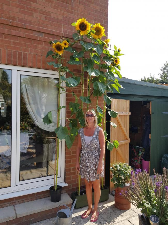 Caroline Davies with the huge sunflower they planted in memory of their dog