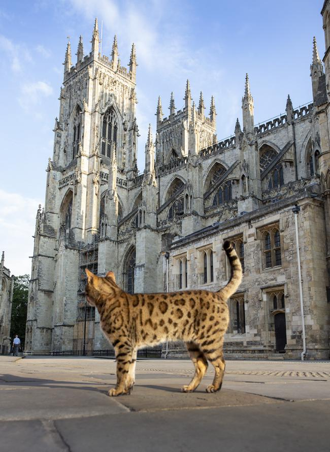 York Minster bells rung for cathedral cat Gerald