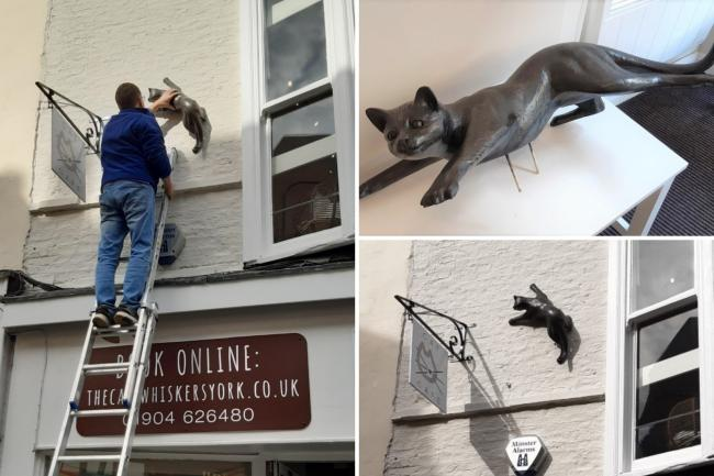 The new cat sculpture is lifted into place at The Cat's Whiskers café in Goodramgate