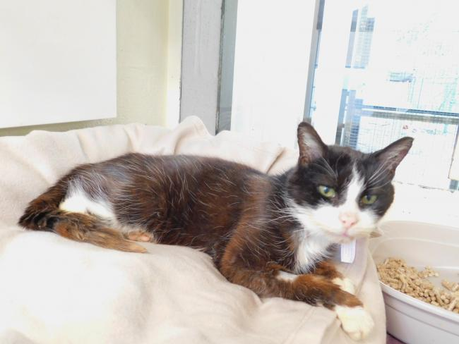 Simon - who is very much a house cat and home body, says the RSPCA's York animal home