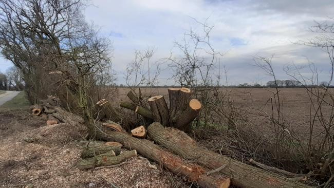 Some of the felled willow trees at the Knapton bridleway. Picture: Stephen Lewis