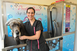 Kelly Burley prepares to shower Great Dane Blue in the new dog wash at Pretty Paws Dog Grooming, in Huntington