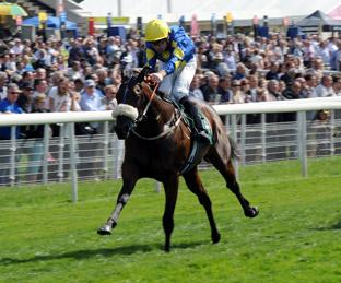 Caspar Netscher, winner of this year's Gimcrack Stakes at York