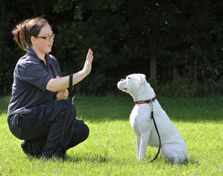 Deaf Dog Taught Sign Language At Blue Cross Centre Near Thirsk