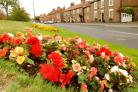 Dunnington in bloom before the storm damage