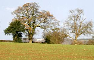 The White Horse at Kilburn seen through the trees on a walk from Coxwold