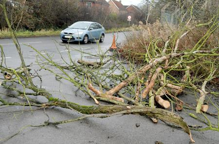 A tree falls in Water Lane, Clifton, during yesterday's heavy wind.