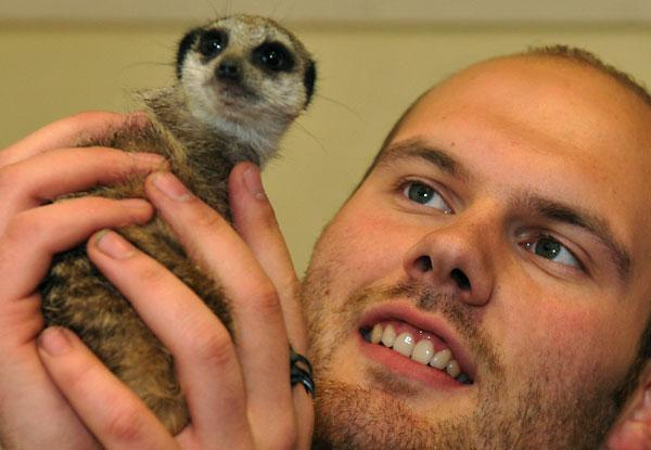 Instructor keeper Rob Wilson with a meerkat at the Askham Bryan College open day
