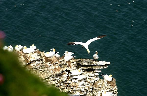 Get close to East Yorkshire seabirds