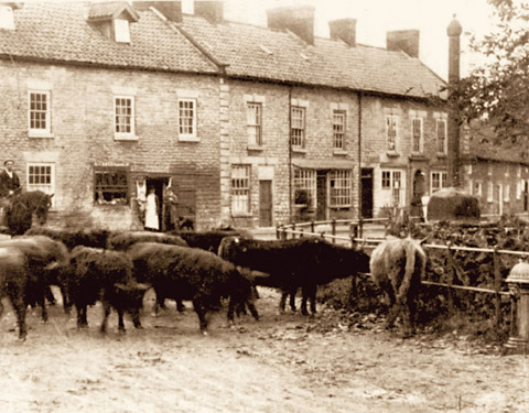 The village cattle market in a picture taken about 1910