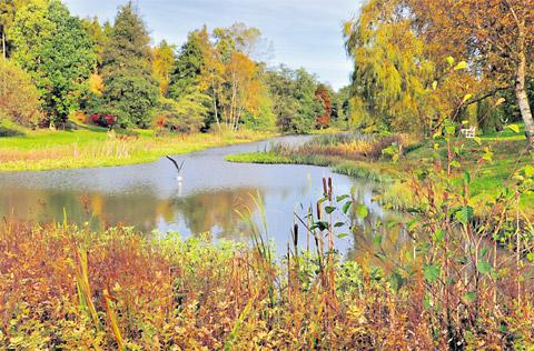 York Press: The lake at the Arboretum at Castle Howard is teeming with wildlife