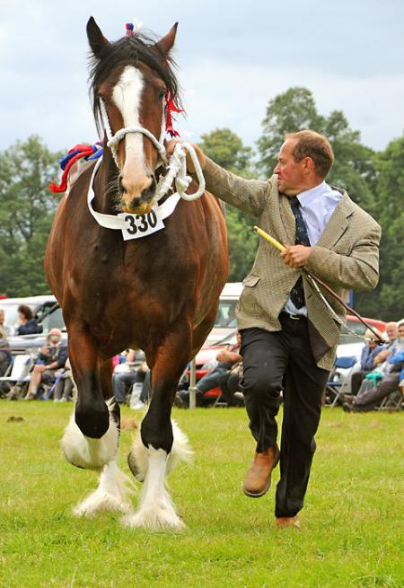 Mark Richardson with his champion shire horse Bewholme Moonlight Sensation, best shire and best heavy horse at Ryedale Show