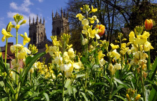 York wins gold in Yorkshire in Bloom competition