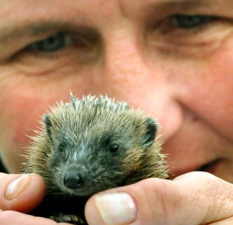 Wendy Aitken, of Osbaldwick, York, with Sporty the baby hedgehog                                Picture: Garry Atkinson
