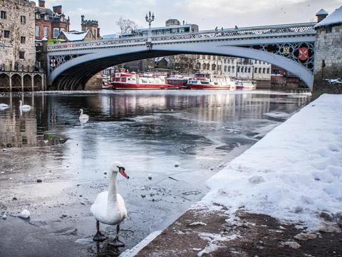 Swans on the frozen river in this wintry scene by John Forrester of York