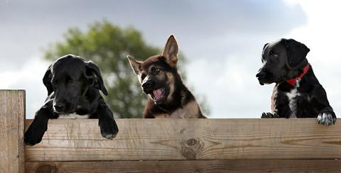 North Yorks police dogs in action