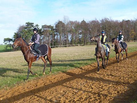 York Press: Wildcard Racing trio, from left, Marchwood, Marford Missile and Julius Geezer