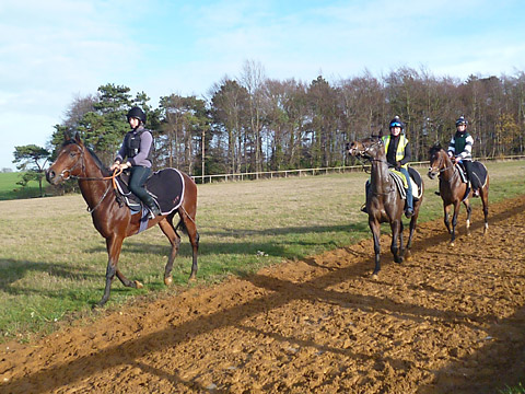 Wildcard Racing trio, from left, Marchwood, Marford Missile and Julius Geezer