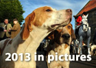 2013 pictures - images that made the news this year.
