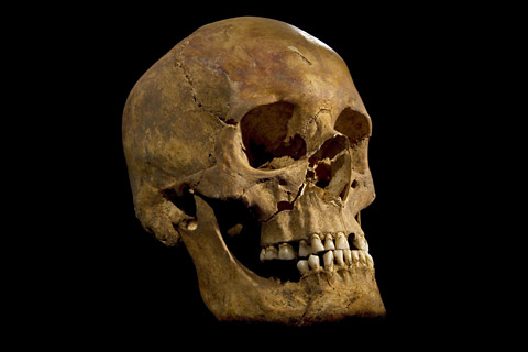 Skull could belong to Richard lll
