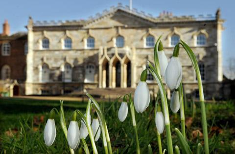 Snowdrops at Bishopthorpe Palace, home to the Archbishop of York, Dr John Sentamu (Picture: Mike Tipping)