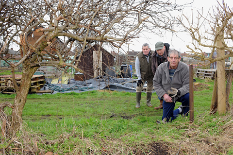 Gardening Club  members, from left, Reg Gibson, Malcolm Mitchell and Barry  Bothamley, view the gap where fencing and part of the hedge was removed by thieves last week