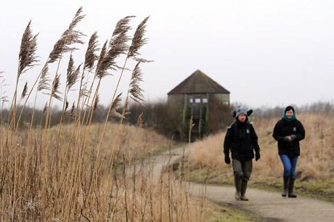 A walk through the reeds on the North Cave Wetlands with one of the hides as a backdrop. Picture:  Garry Atkinson