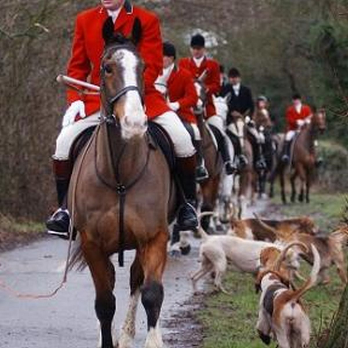 Hunt denies claims of illegal fox hunting