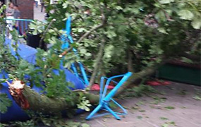 York Press: Miraculous escape for two small children as huge branch falls from tree in York's Coppergate Centre