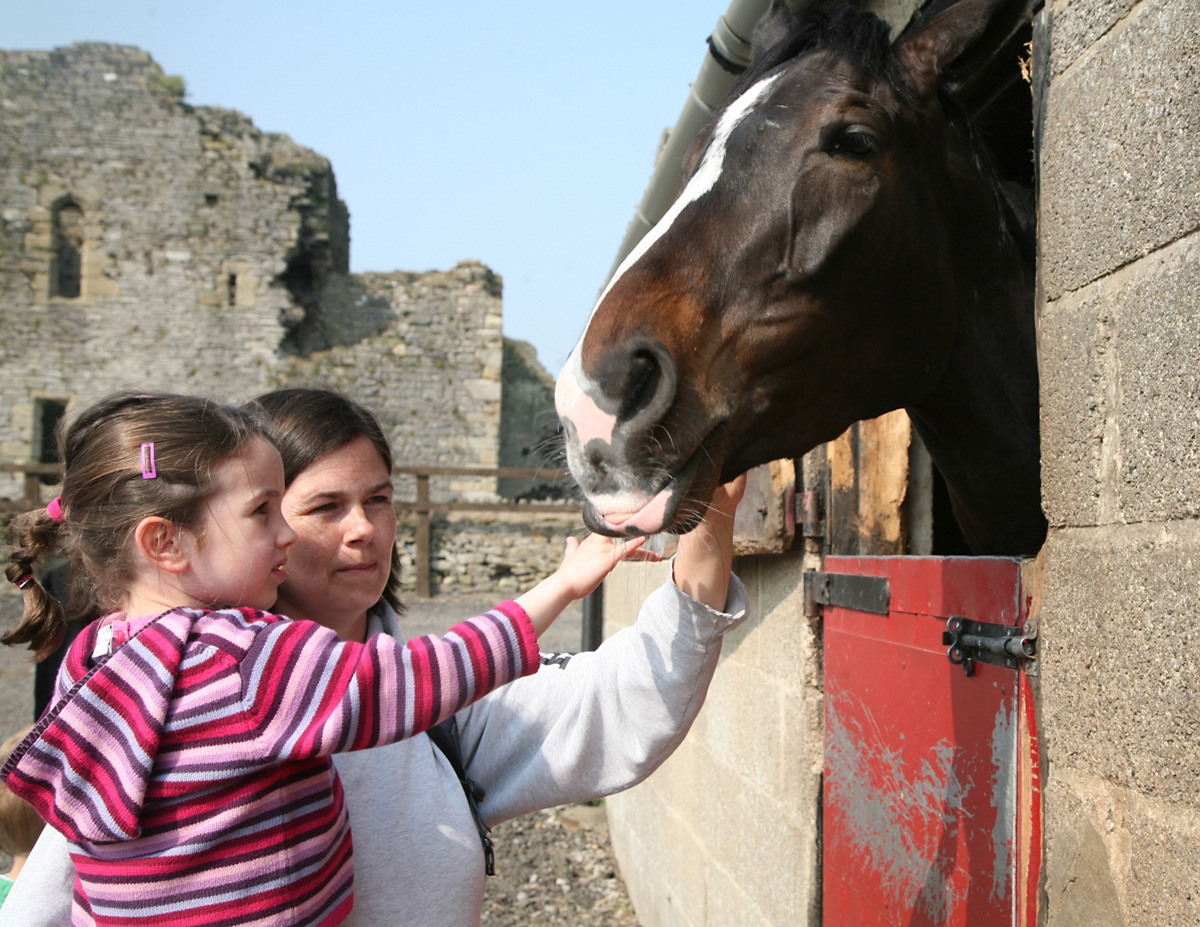 Visitors to Ben Haslam's yard enjoy the Middleham Stables Open Day