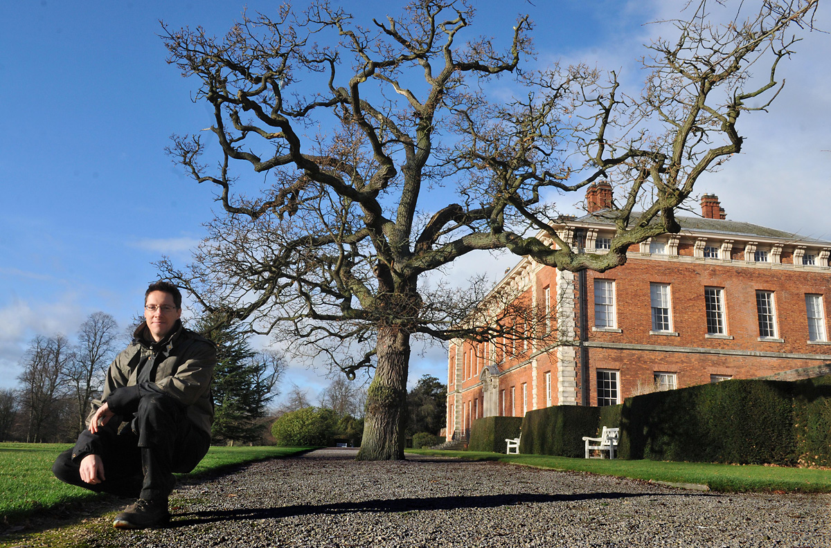 National Trust trees are county record-holders