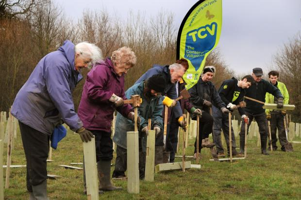 Some of the 800 trees being planted at Rawcliffe Country Park this week by The Conservation Volunteers, Johnsons of Whixley and City of York Council