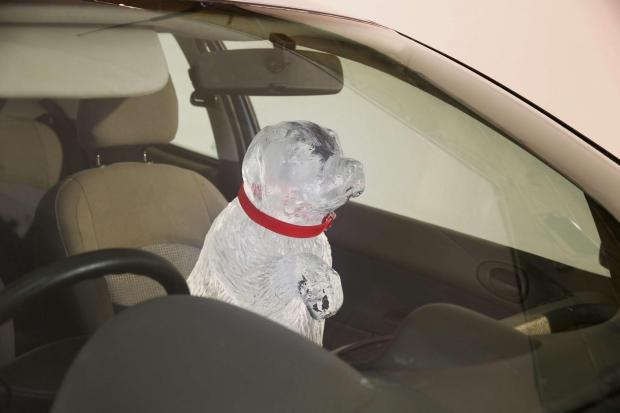 Plea over dogs left in cars