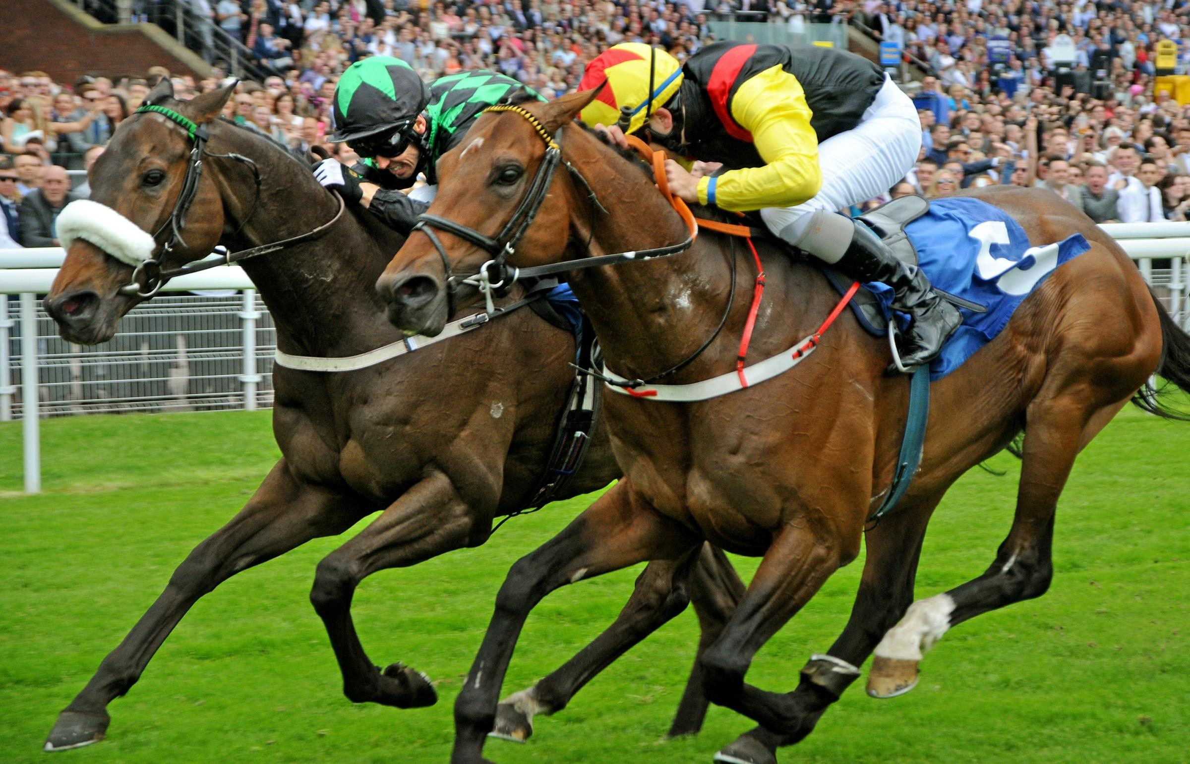 Clever Cookie, left, and Ralston Road can't be separated as they dead-heat in the Stowe Family Law LLP Grand Cup at York Racecourse. Picture: David Harrison