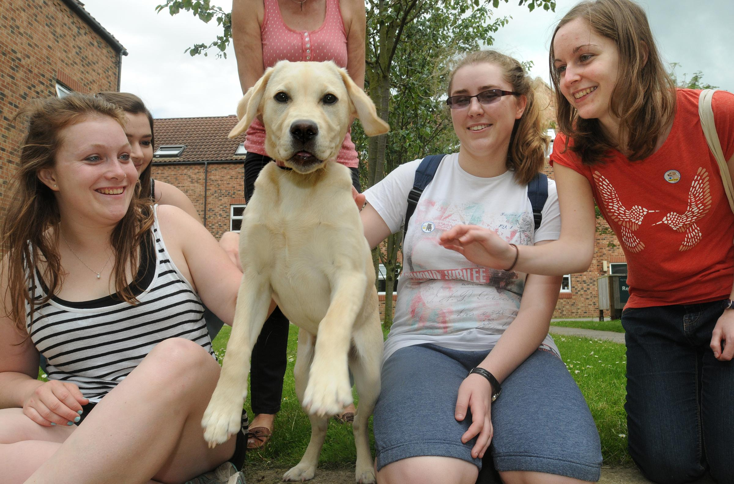 Puppy love as guide dogs visit stressed out university students