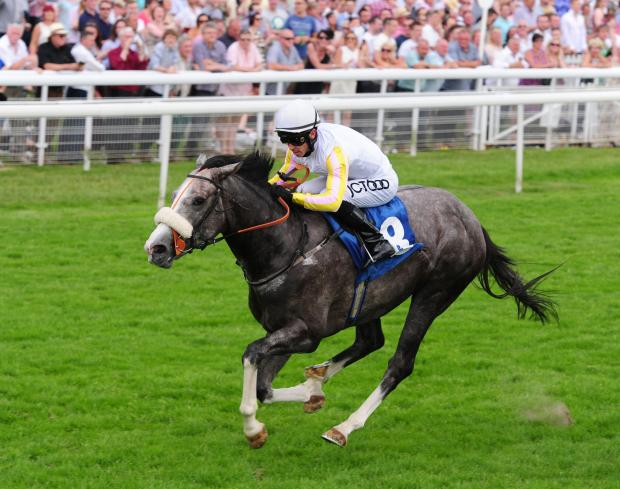 The Grey Gatsby performed admirably in the Juddmonte International but Australia was too good