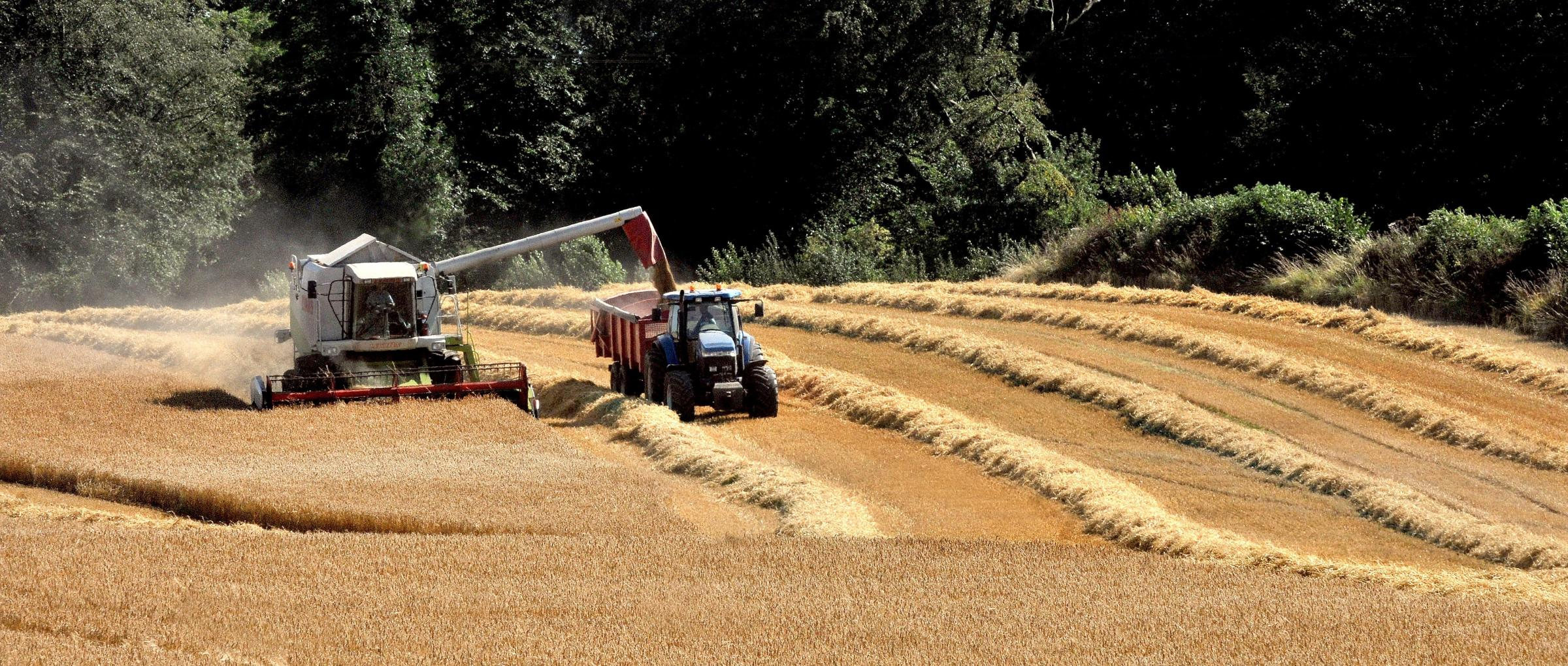 A combine harvester is busy at work in the fields at Saxton near Tadcaster. Picture: Nigel Holland.