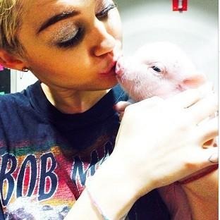 Miley Cyrus has a new piglet named Bubba Sue (Miley Cyrus/Instagram)