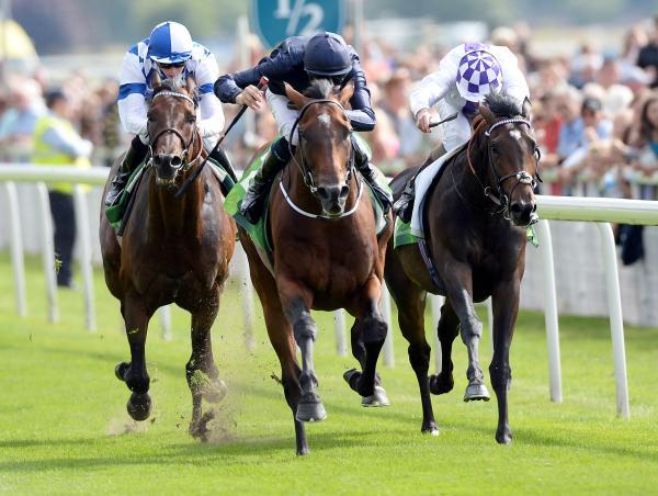 Declaration Of War, centre, is pictured winning the Juddmonte International on day one of the 2013 Ebor Festival at York Racecourse and big crowds are expected on Knavesmire this week for this year's four-day meeting