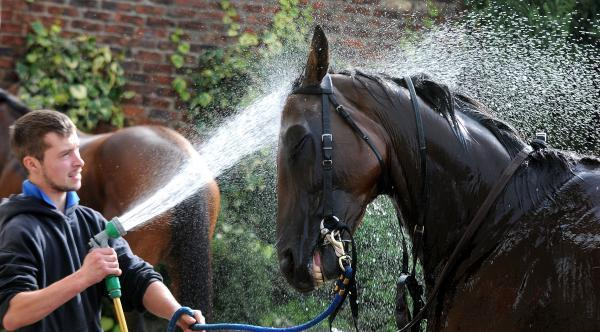 Tim Ayres gives Fairy Mist a welcome dousing at Tim FitzGerald's Norton stable ahead of last year's