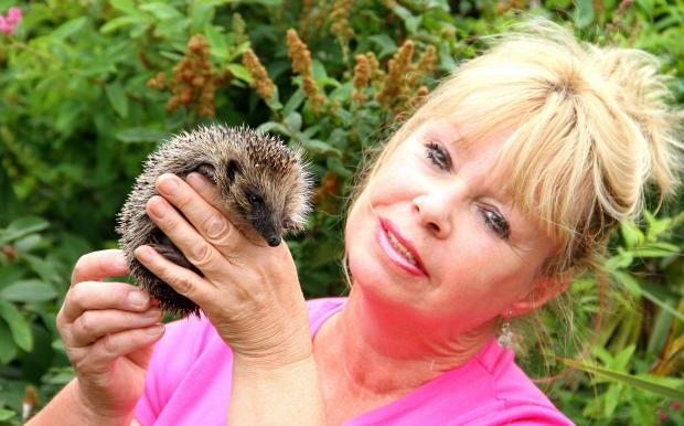Annette Pyrah and a hedgehog at Selby Wildlife Rescue.