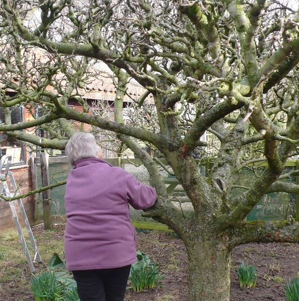 Apple Tree Pruning On 17 February At 10 00