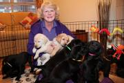 Angie Hall at her home in Pocklington with the puppies which are being trained by the charity Canine Partners as assistance dogs to help disabled people
